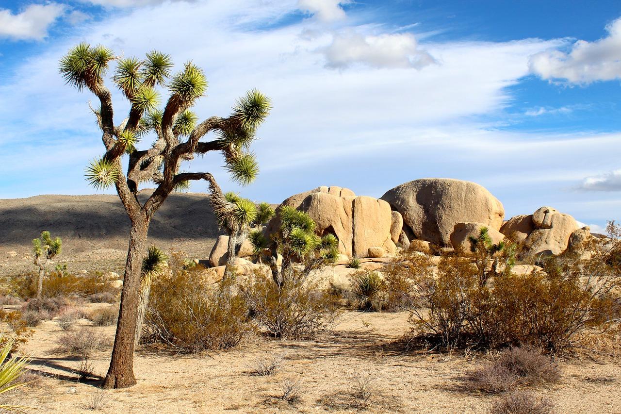 El Parque Nacional Joshua Tree queda cerca del Cañón y merece una visita según Fernando V. H. al ser un icónico referente de la cultura popular y por su riqueza paisajística